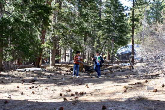 Idyllwild, Californie : Pine trees and curious creatures