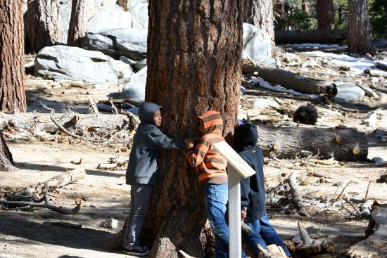 Idyllwild, แคลิฟอร์เนีย: It's all about nature. No phone signal here.