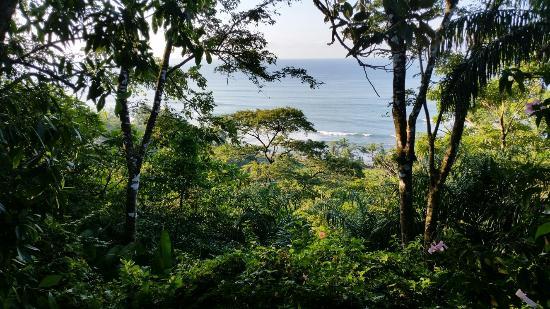 Tiskita Jungle Lodge: 20151204_063950_large.jpg