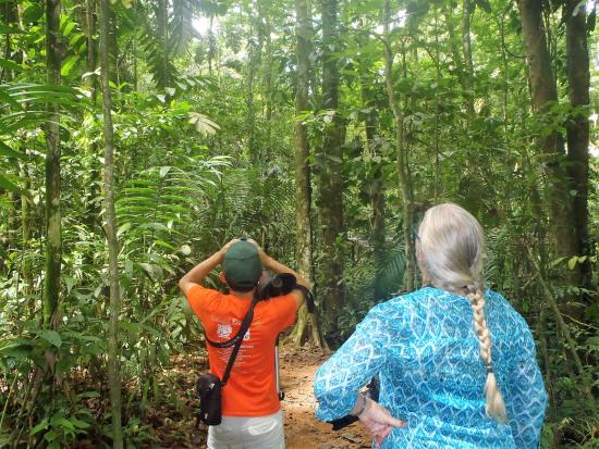 Chilamate Rainforest Eco Retreat: day time free jungle walk