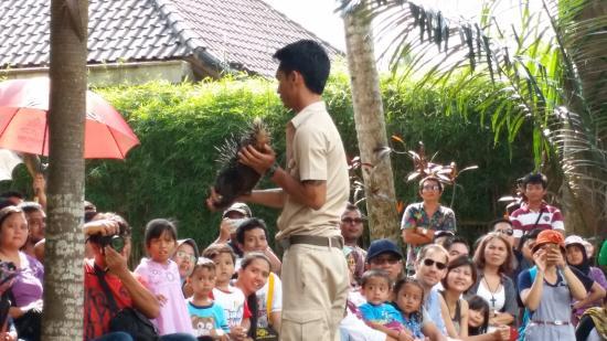 Kebun Binatang Bali Zoo: animal show