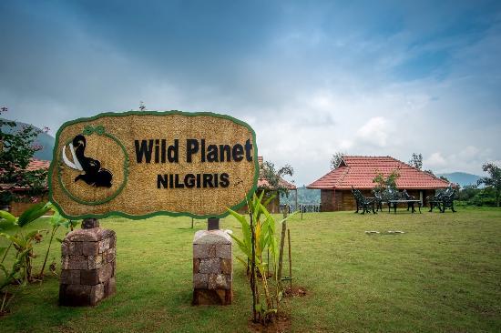 Valley view picture of wild planet jungle resort devala - Plante jungle ...