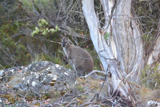 Miena, Australia: More locals
