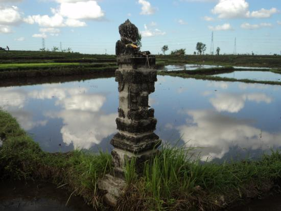 Buwit, Indonesia: Rice Field