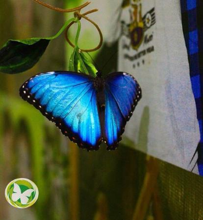 Tropical Butterfly Park and Petting Zoo