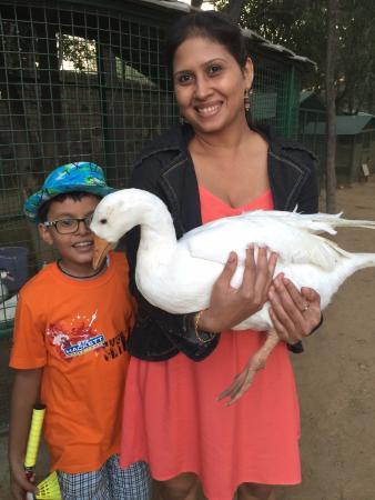Westin Sohna Resort and Spa: Animal/Bird Farm