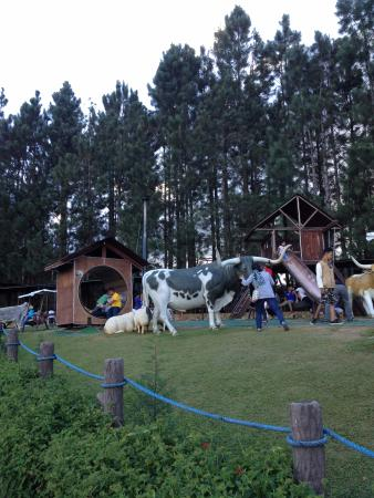 Grizzly Cafe - Picture of Dahilayan Forest Park Resort