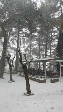 Forest Park Hotel: 20160101_105403_large.jpg