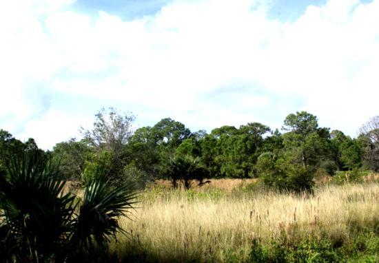 Canal Point, FL: Landscape at DuPuis Reserve