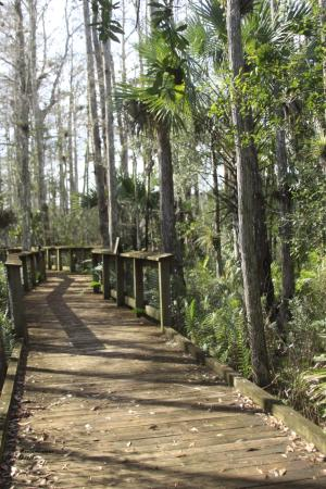 Canal Point, FL: Boardwalk hiking area at DuPuis Reserve