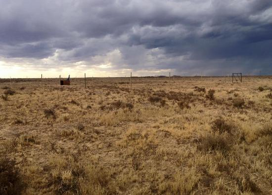 Felidae Centre : The view before a thunderstorm