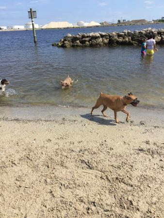 Davis Island Dog Beach Photo0 Jpg