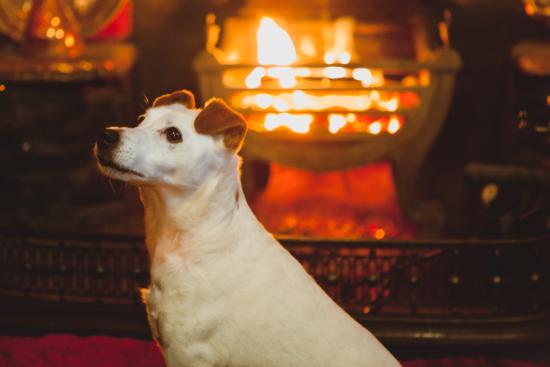 Llanarmon DC, UK: Warm, cosy and dog friendly