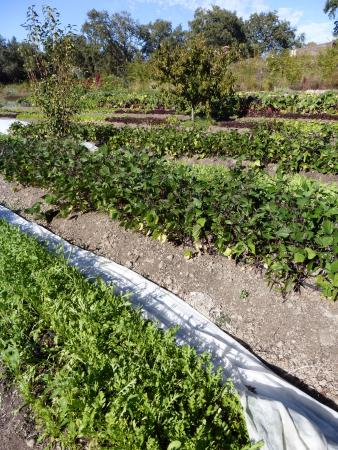 Forestville, CA: Growing its own organic produce