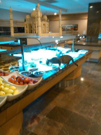 Alba Queen Hotel: Katzen bedienten sich am Buffet