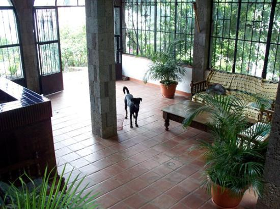 Mikaso Hotel Resto: A friendly dog has wandered into the lobby.