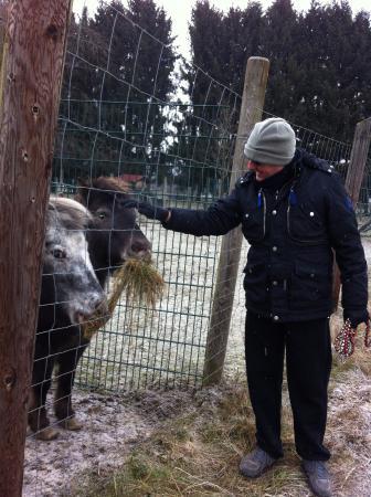 Rosegg, Αυστρία: animali tenuti molto  bene