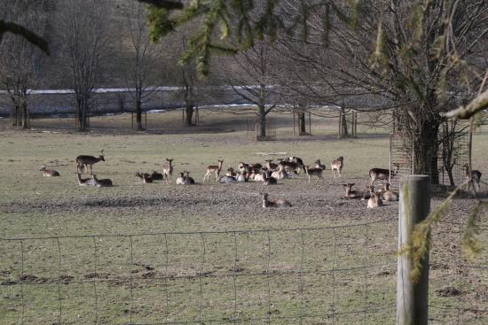 Rosegg, Αυστρία: Una miriade di cervi e daini