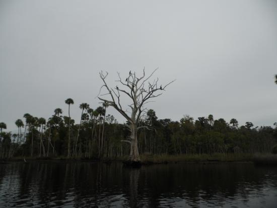 Yankeetown, FL: along the Withlacoochee