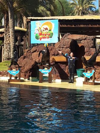 zeeleeuwenshow - Picture of Oasis Park Fuerteventura, Fuerteventura - TripAdv...