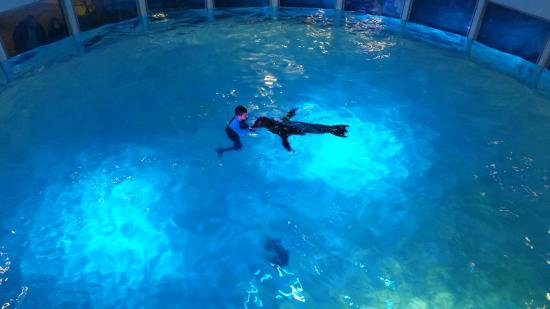 20151227 130355 Picture Of Aquarium Of Niagara