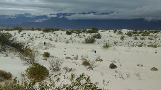 Cuatro Cienegas Reserve : dunas de yeso