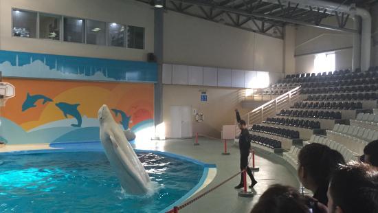 İstanbul Dolphinarium: Delphin