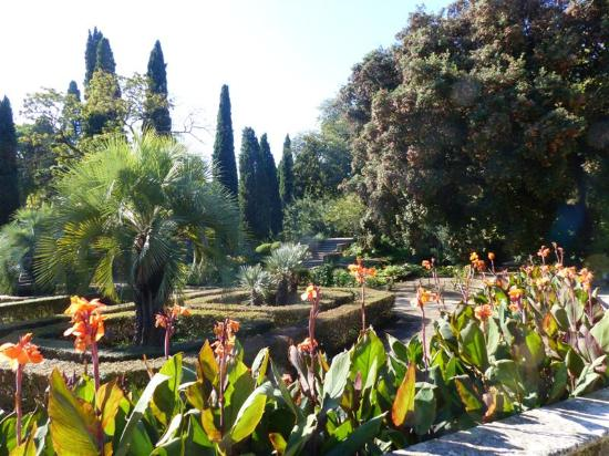 les cannas en fleur photo de jardin des plantes montpellier tripadvisor. Black Bedroom Furniture Sets. Home Design Ideas
