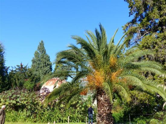 Palmier picture of jardin des plantes montpellier for Jardin des plantes orchidees 2016