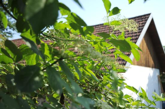 Kukmirn, Oostenrijk: Frühling im Südburgenland