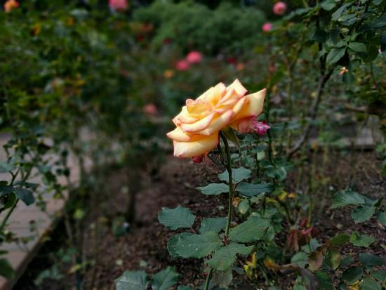 Washington Oaks Gardens State Park: IMG_20151230_122459_large.jpg
