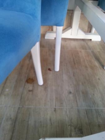 Green Beyza Hotel Antalya : cockroach in the dining room