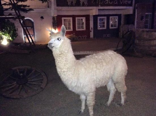Beautiful decoration picture of alpaca view restaurant for Alpaca view farm cuisine bangkok