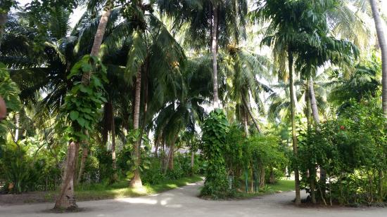 Kuramathi: Walk through the island