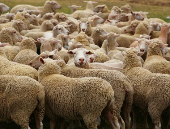 Tasmanien, Australien: carringa farm