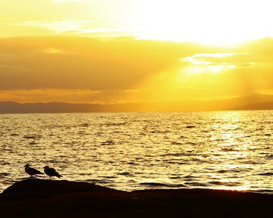 Tazmanya, Avustralya: cove beach