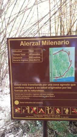 Bosque De Alerces Milenarios : cartel informativo