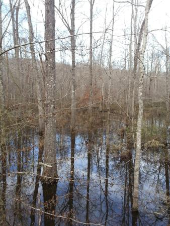 Pocahontas, TN: Big Dismal Swamp