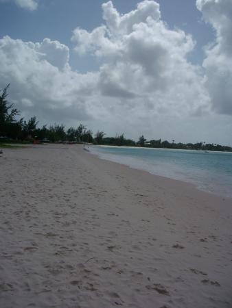 Halcyon Palm: boatyard beach bridgtown