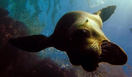 Paraiso Del Mar: Friendly sea lion