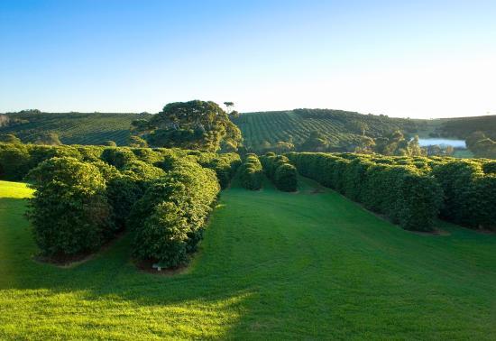 Newrybar, Australia: Zentveld's Plantation and Roastery