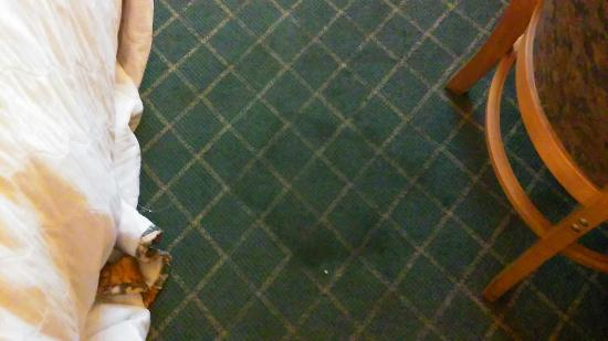 Days Inn West Palm Beach : Cigarette hole in blanket and floor is filthy,looks like someone rebuilt and engine on the floor