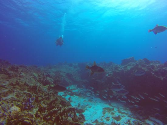 Cozumel Sports: I got so comfortable down there I didn't want to return to the surface
