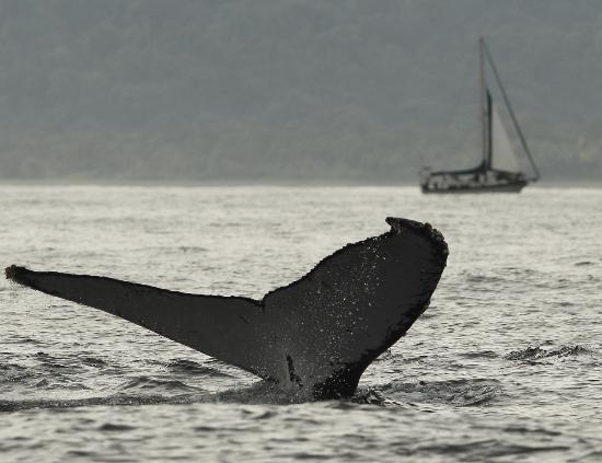 Ecolodge Nautilos: Ballenas en Nuquí