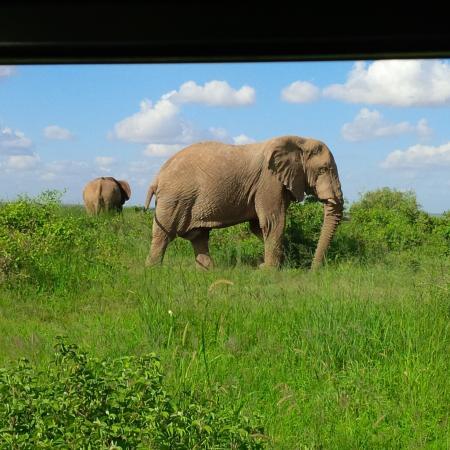 Zdjęcie Amboseli Sopa Lodge