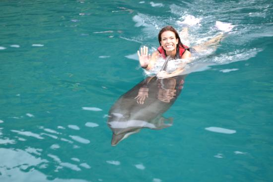Dolphins Pacific: Yey, mission complete!