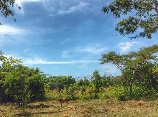 West Bali National Park, Indonesia: photo0.jpg