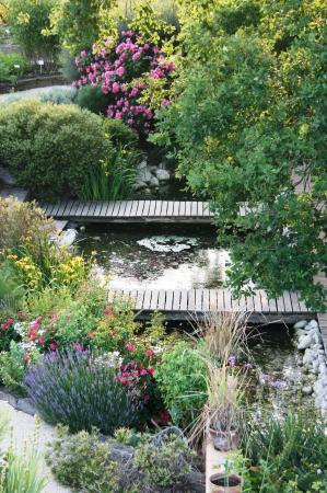 Bassin en bas du jardin de plantes m dicinales picture for Les plantes du jardin