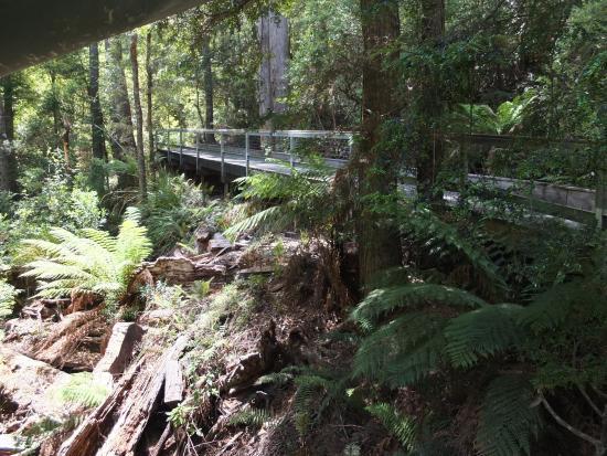 Smithton, أستراليا: Sinkhole forest