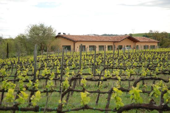 Villa Acquaviva - La Fattoria: passegiando tra i vigneti a Marzo